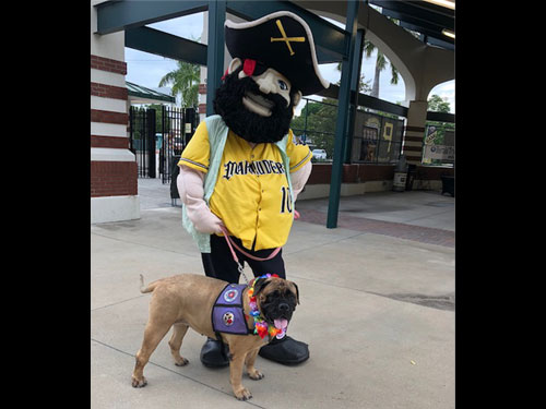 Pirates mascot and therapy dog