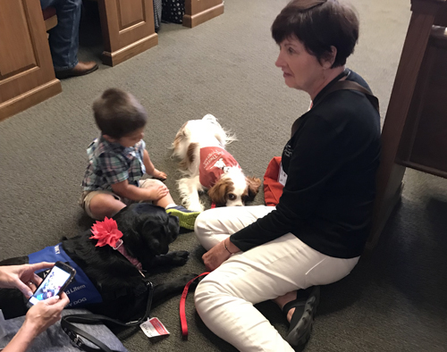 therapy dogs and handlers